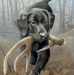Bullador  Labrador retriever & Bulldog Mix Dog Breed